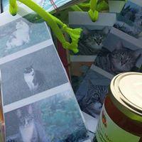 Flohmarkt fr die Katzenhilfe