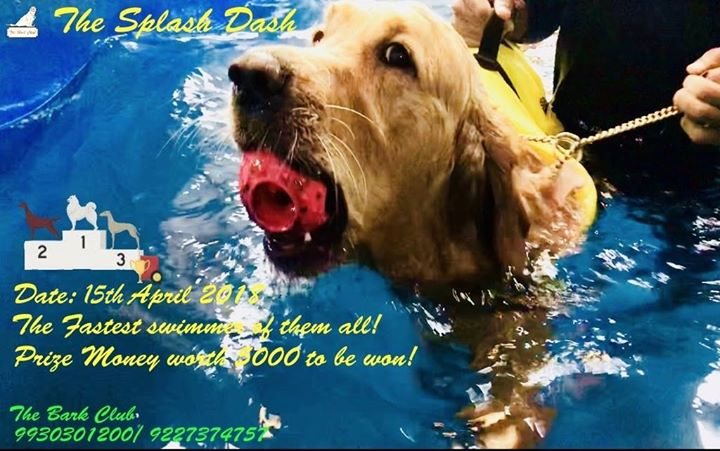 The Splash Dash Fastest Doggie Swimmer