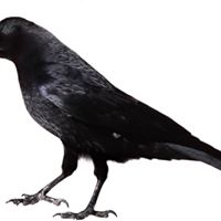 YSU Students in CROW (Compose a Review of Writing)