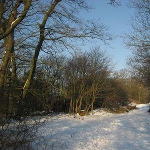 Winter Warmer Walk