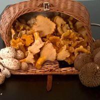 Portland Views n Brews Edible Mushroom ID and Foraging