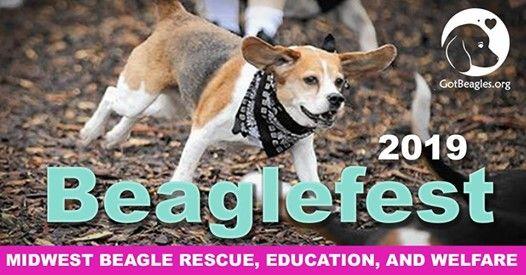 Beaglefest 2019