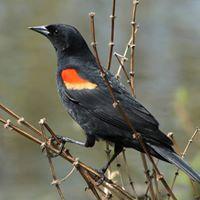 Spring Birding 101