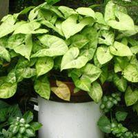 Houseplant Repotting Workshop