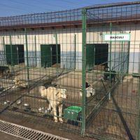 Futter fr die Shelterhunde aus Motru-Rumnien