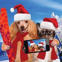 Santa Selfies &amp Pet Adoption