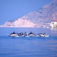 Anche a Milano c chi studia i delfini