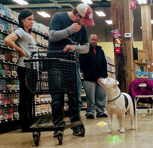 Basic Obedience class Livonia