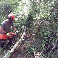 Chainsaw Maintenance Cross Cutting Felling up to 380mm