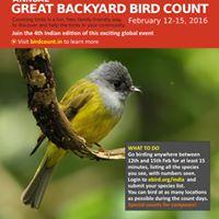 Great Backyard Bird Count Tezpur University Campus