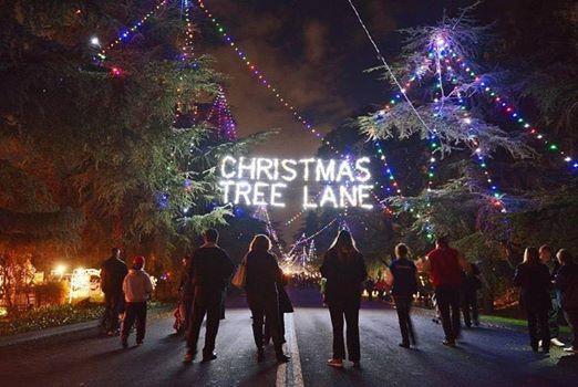 IDC Christmas Tree Lane Walk