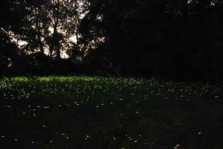 lucciole vitruvio percorso monteveglio