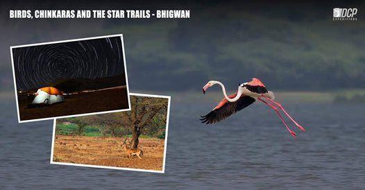 Birds of Maharashtra Bhigwan - February 2019