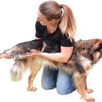 Fit auf 4 Pfoten mit Tierzeit-Friedberg Tina Goldstein