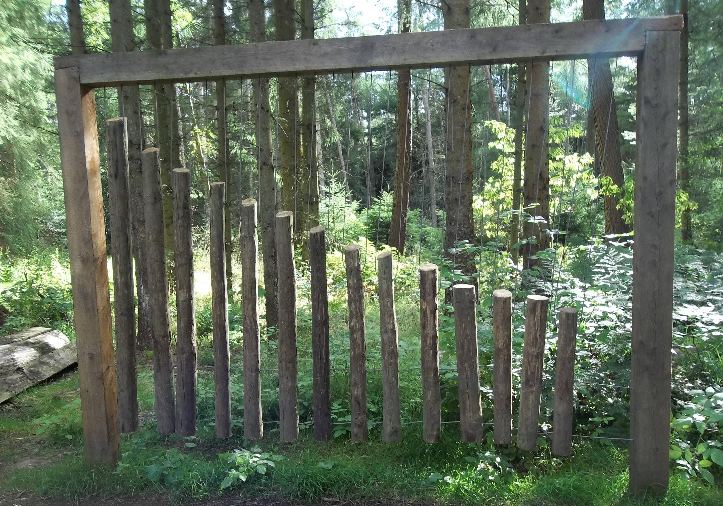 Public Art Recording Session - Camperdown Park  Templeton Woods