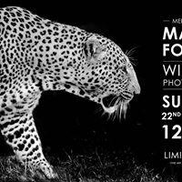 Meet the Artist - Martin Fowkes Wildlife Photography