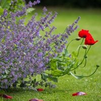 Garden Masterclass - Getting to Grips with Perennials