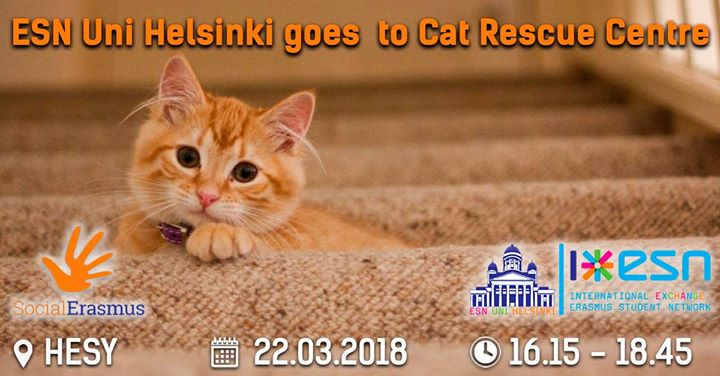 Esn Uni Helsinki Goes To Cat Rescue Centre At Helsingin