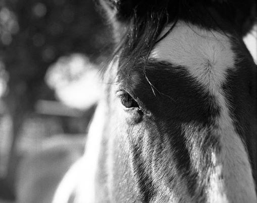 Horseback Camp 101