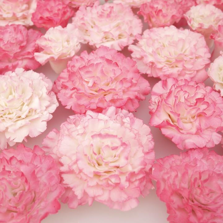 Workshop Easiest Carnation Ever