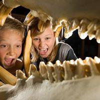 Familierundvisning p Zoologisk Museum efter lukketid