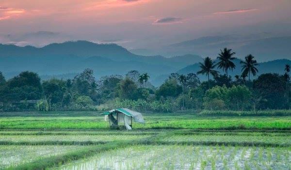 Northern Thailand - Golden Triangle