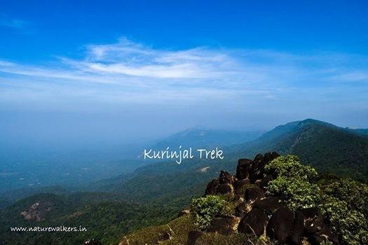 Kurinjal Trek - Chikmagalur - Nature Walkers