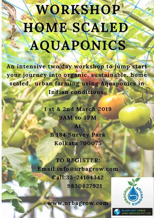 Workshop Home Scaled Aquaponics