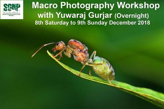 Macro Photography Workshop Overnight Camp