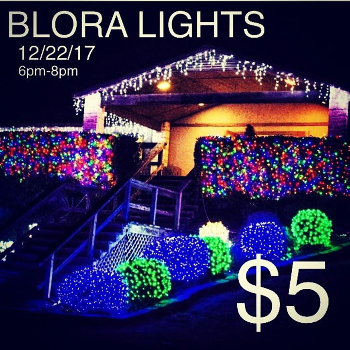 Christmas Lights At BLORA