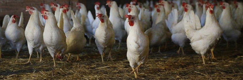 Poultry Health Management Workshop