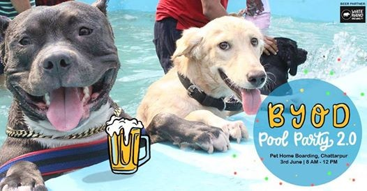 Bring Your Own Dog Pool Party 2.0