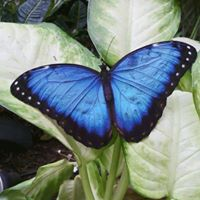 Save The Butterflies - FB Live Event