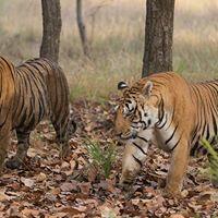 Wildlife Photography Workshop for Beginners  Bangalore
