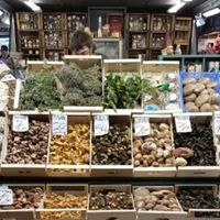 Free Mushroom Cultivation Workshop