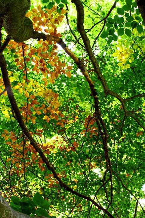 Bagno di foresta nei faggi