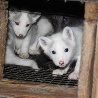Action contre la fourrure  Marseille