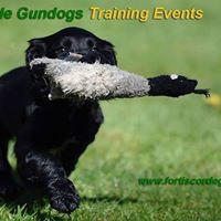 Novice Gundog Training