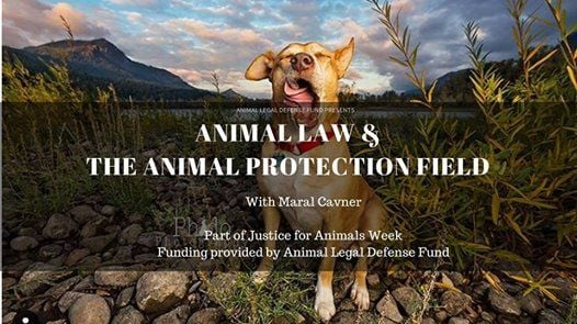 Animal Law and the Animal Protection Field
