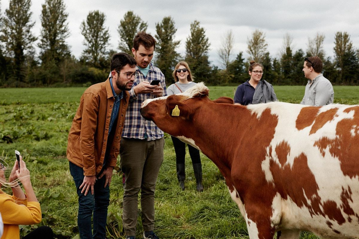 Quickes Home Farm Experience -30th August 2019
