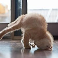 Yoga with puppies &amp kittens (at Providence Power Yoga)