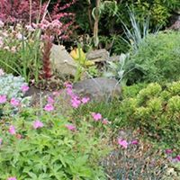 A Year in the Garden by Cherrie Townsend plus Mini Plant and Flo