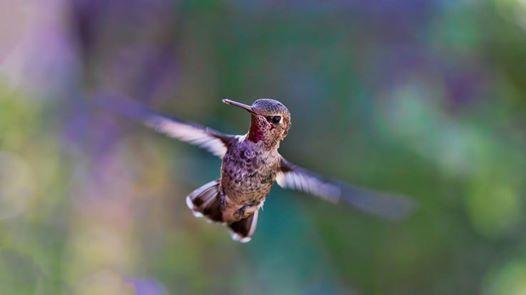 Kolibri - trninkov srie