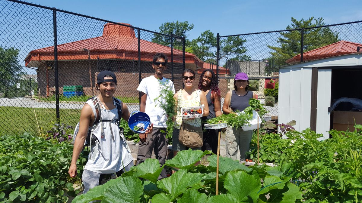 Volunteer at the Theodore Hagans Community Farm and Greenhouse