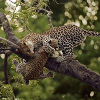 Adventure 360 Africa