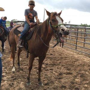 Popsicles & Ponies Horsemanship Camp