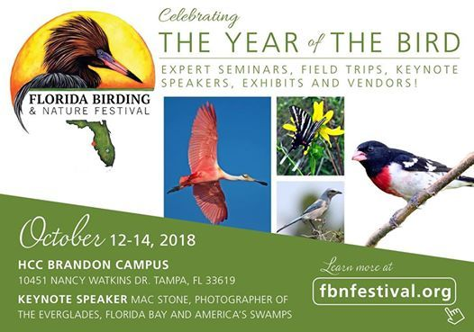Florida Birding And Nature Festival At Hcc Brandon Campus Florida