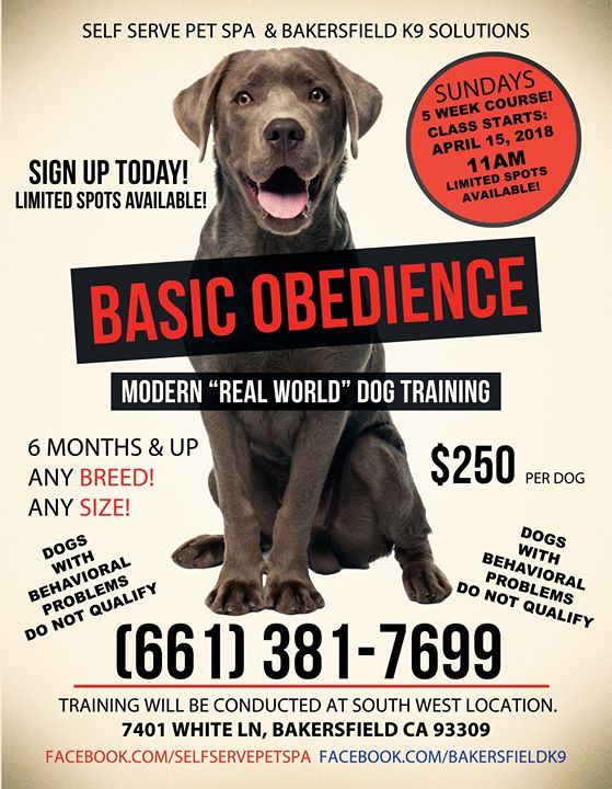 Real world basic dog training 5 weeks at self serve pet spa sw real world basic dog training 5 weeks solutioingenieria Images