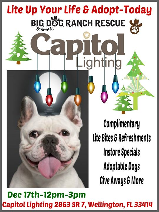light up your life adopt today capitol lighting at capitol