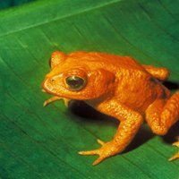 Orange Frog Workshop with Train the Trainer Add On